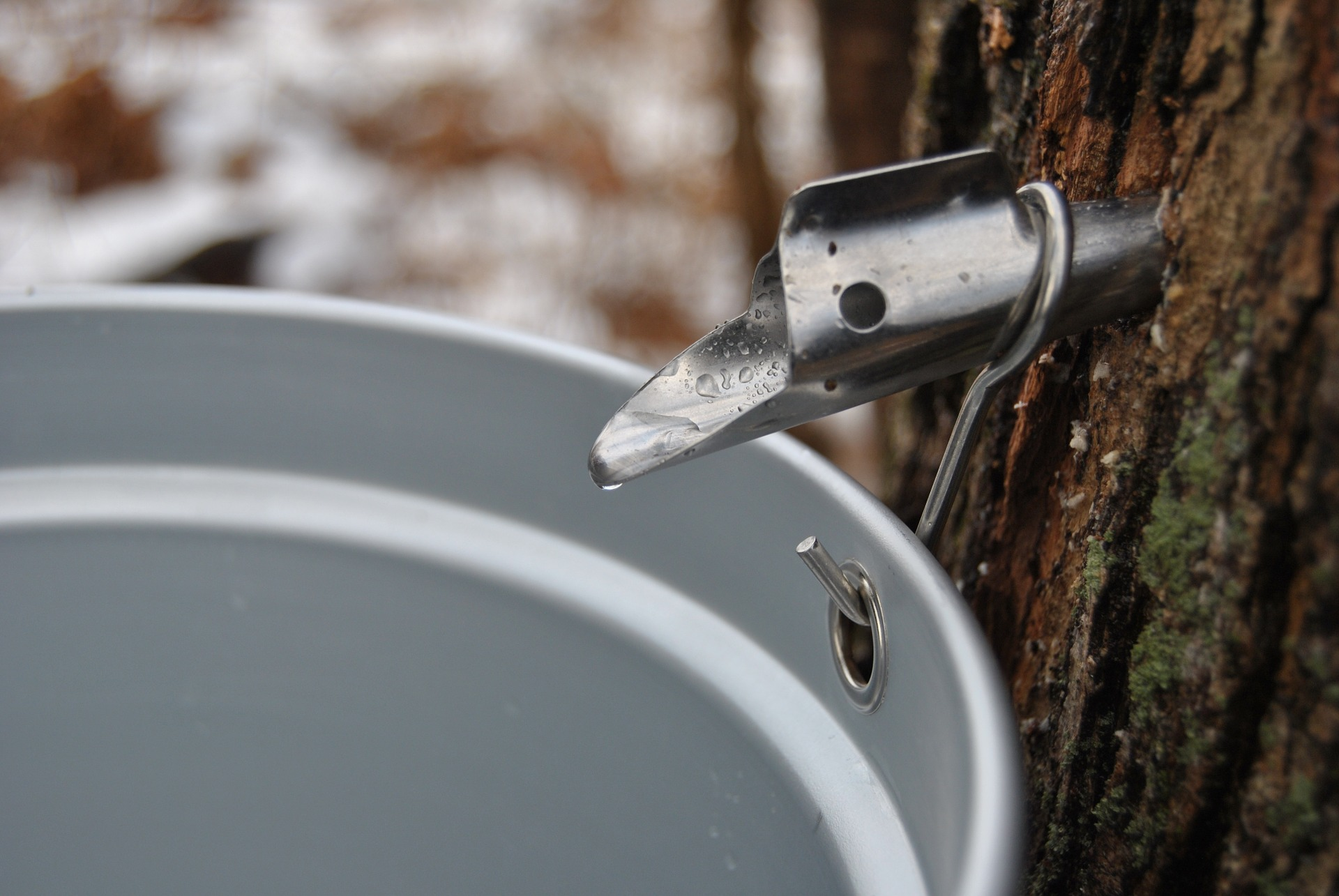 An Unconventional Handicraft: Maple Tapping