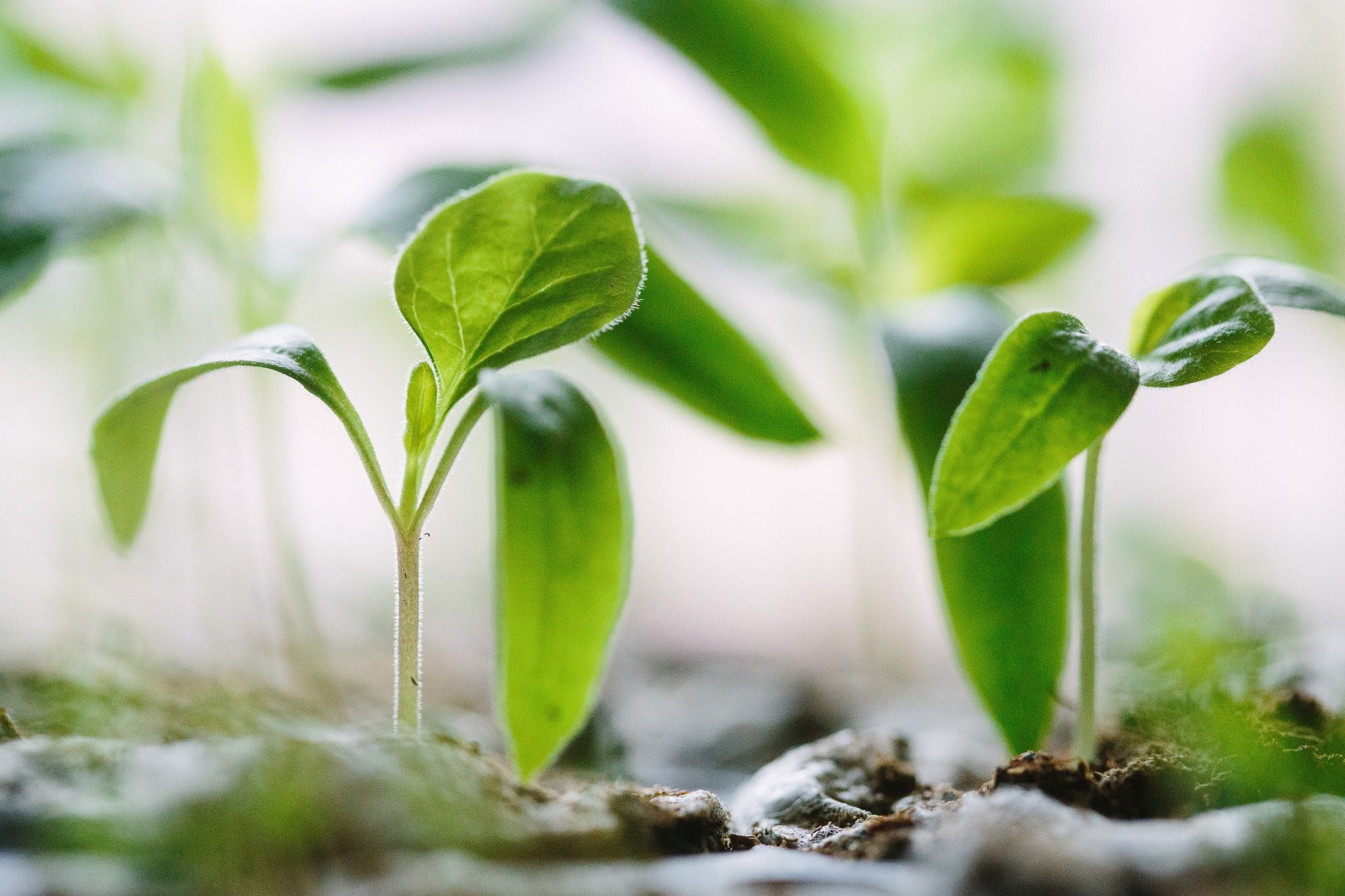 Thinning Our Garden: When We Need Room To Breathe & Grow