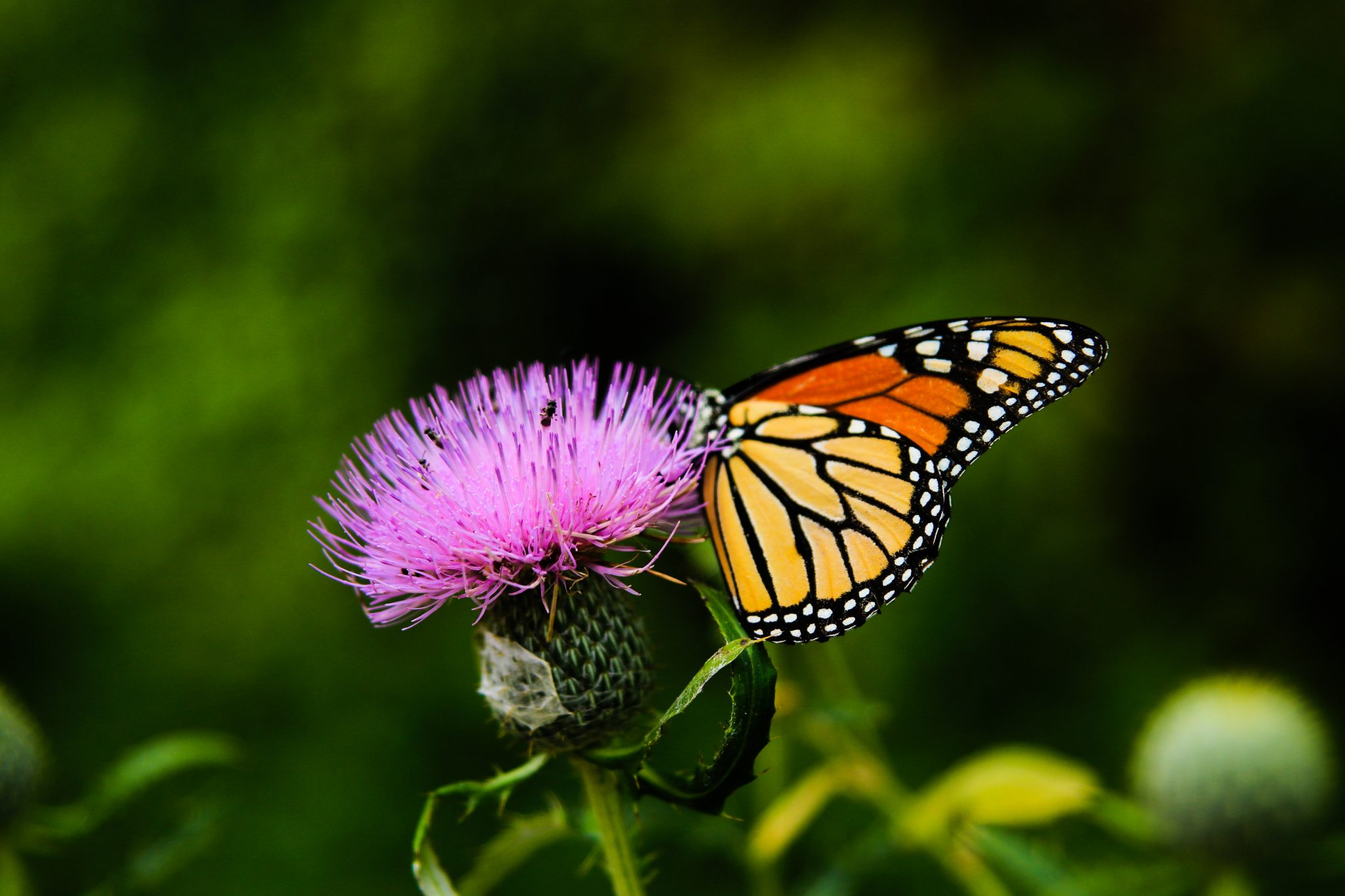How Chasing Butterflies Can Teach You About Faith