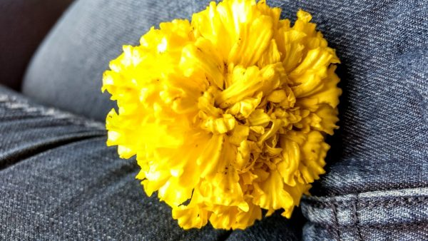 The Smell of Marigolds In the Fall | Those Kinds of People